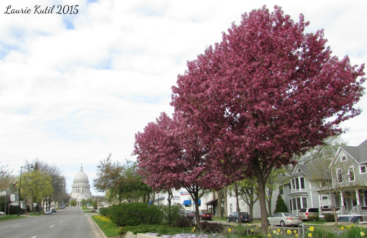 Capitol and Redbuds WM