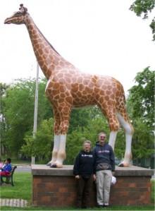 Delavan giraffe