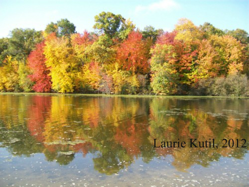 mirror-lake-tree-reflection-wm
