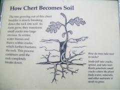 Chert becomes soil