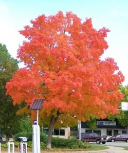 9-28-11 fall