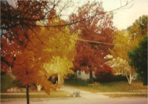 Fall View 1970's