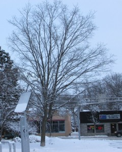 Fav Tree Winter 1-21-13