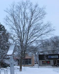 Fav Tree Winter 1-21-13