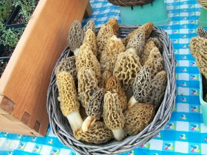 Morel Mushrooms 4-21-12
