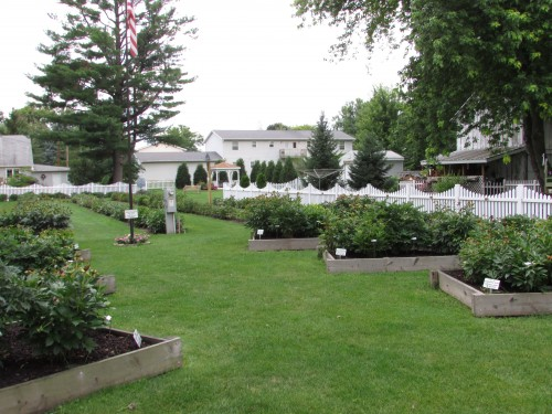 Sisson's Peony Gardens view