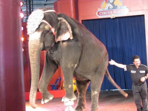 Circus World Museum elephant