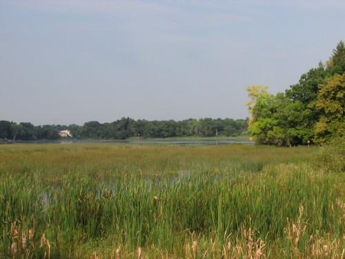 Wyona Park marsh