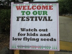 Low flying seeds
