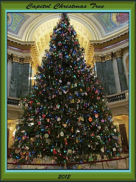 Wisconsin Capitol Xmas Tree 2012
