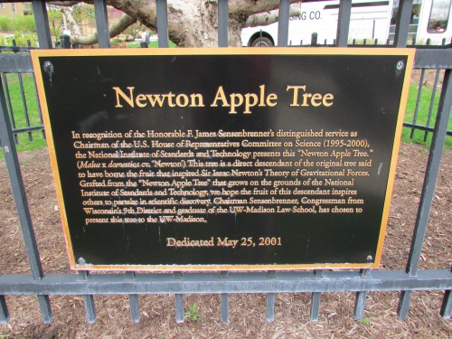 Newton Apple Tree plaque