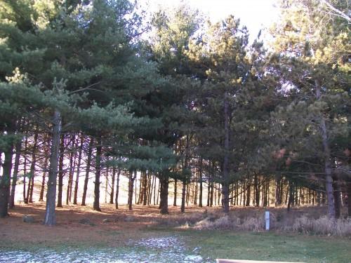 Token Creek woods