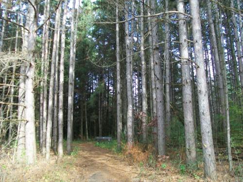 Steinke Basin Woods