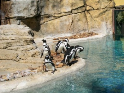 Penguins at Vilas Zoo