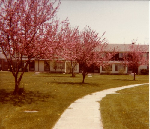 Court F-2 Three Redbuds 1986
