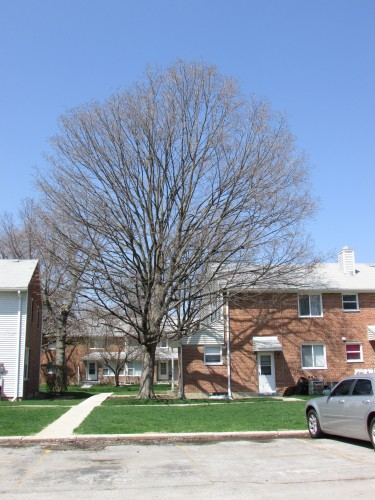 Court F-2 tree 1 - 2014