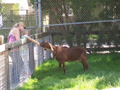 Feeding goat at Ochsner Zoo in Baraboo