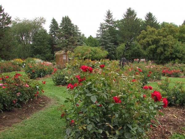 Dubuque Rose Garden