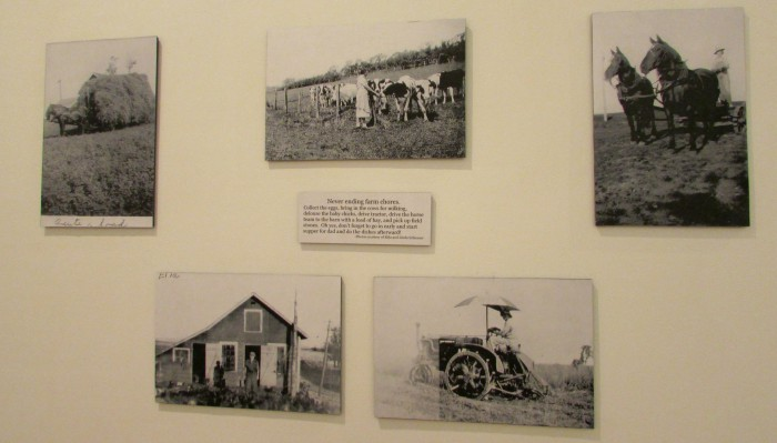Linda Schiesser photos on farm