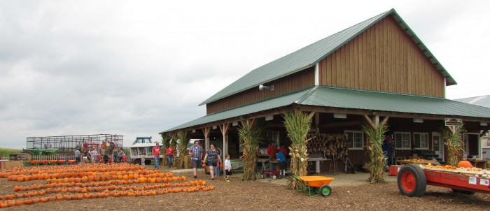 Schuster's store and pumpkins