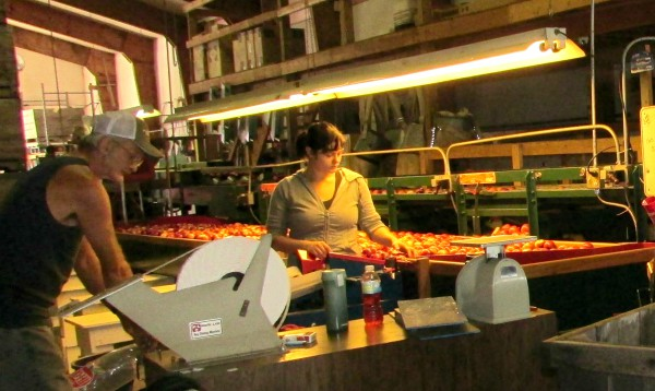 Apple processing at Ski-Hi in Baraboo