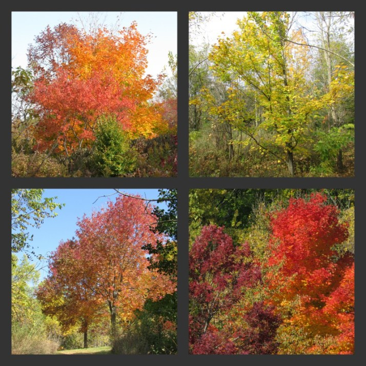 Fall Color Collage at Gov Dodge