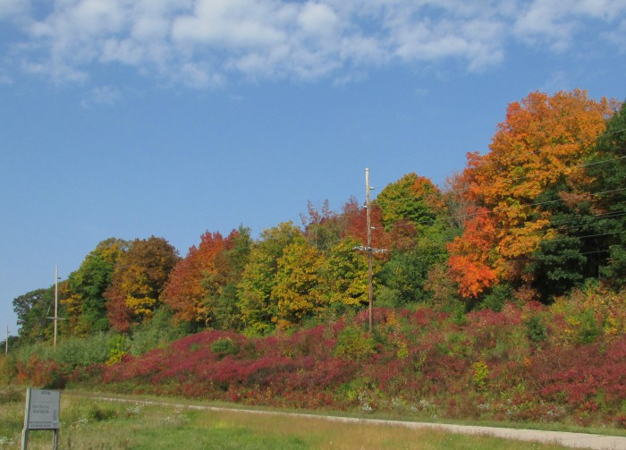 Fall trees in Baraboo
