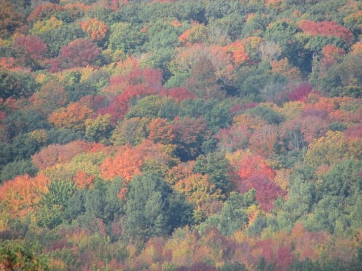 Baraboo Hill fall color