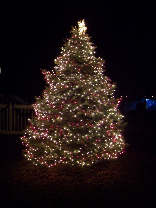 Sauk Prairie Christmas Tree