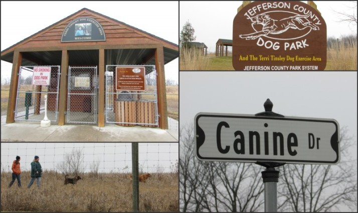 Jefferson County Dog Park Collage