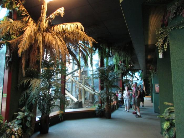 Inside Primate House at Vilas