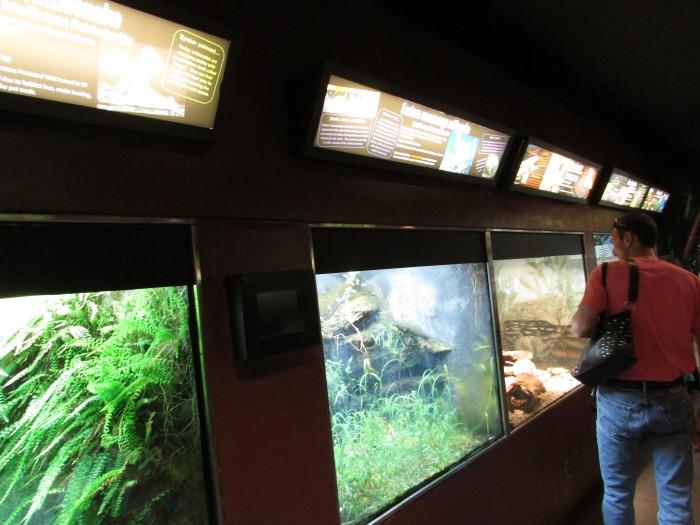 Inside Herpetarium at Vilas