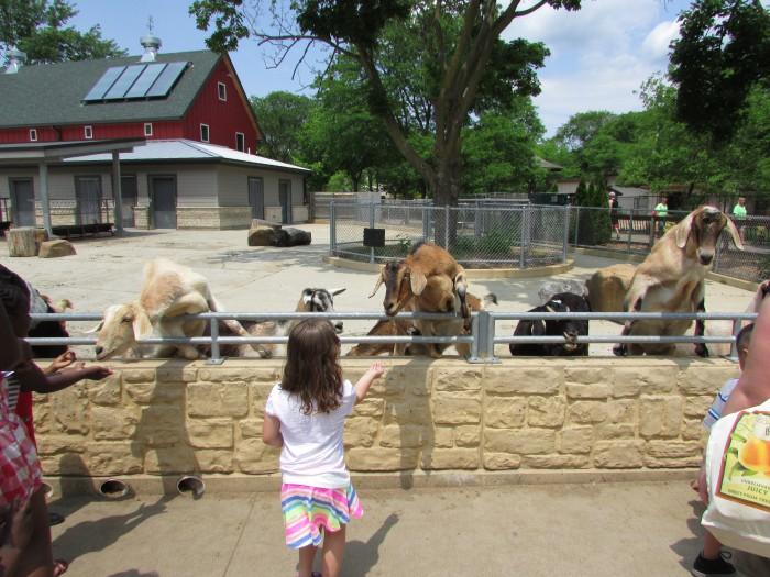 Petting Zoo at Vilas