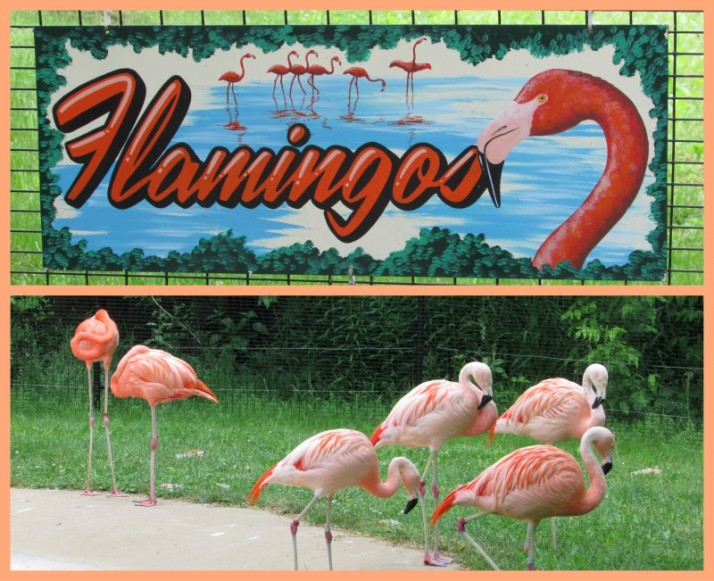 Pink Flamingos at Vilas