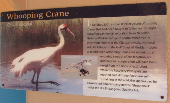 Whooping Crane sign