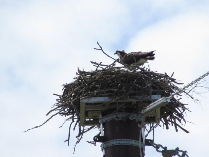 Hawk's Nest in Lac du Flambeau