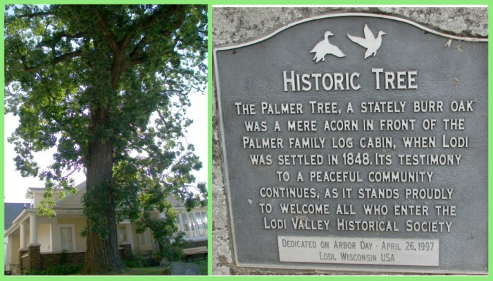 Palmer Tree and Plaque