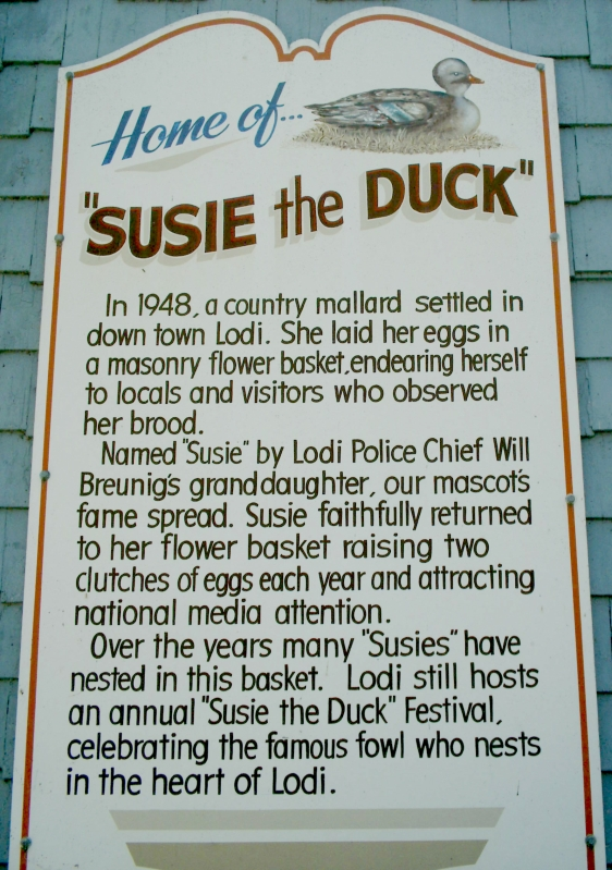 Susie the Duck history