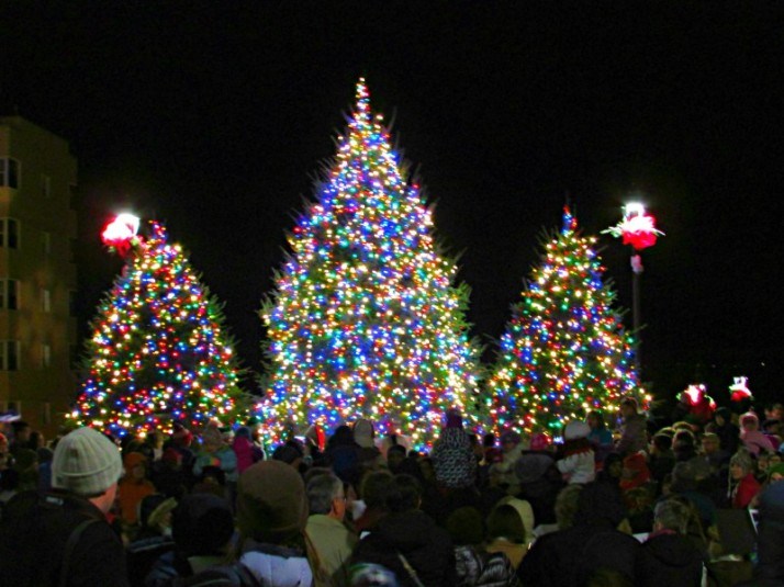 Edgewater Christmas Trees