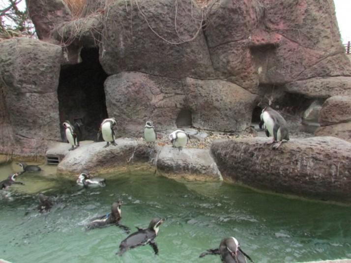 Milwaukee Zoo Penguins