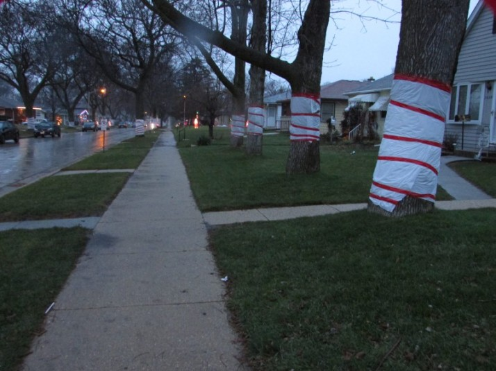 Candy Cane Trees IMG_0407