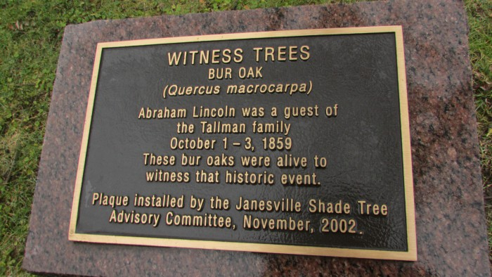Witness Tree Plaque