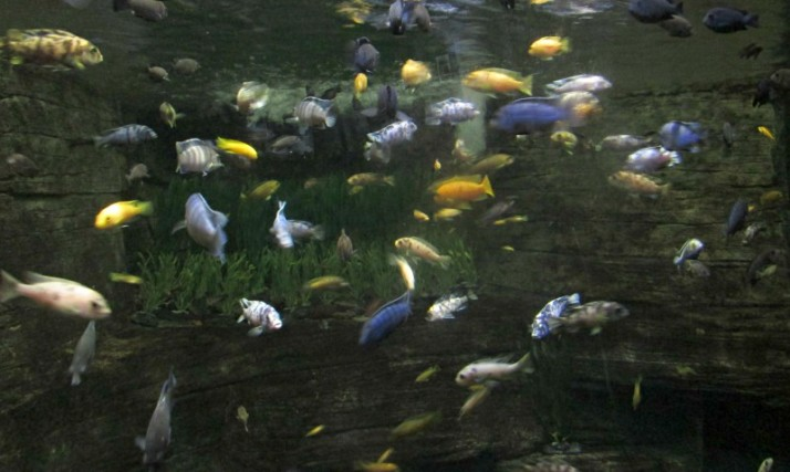 Small fish aquarioum at Milwaukee Zoo