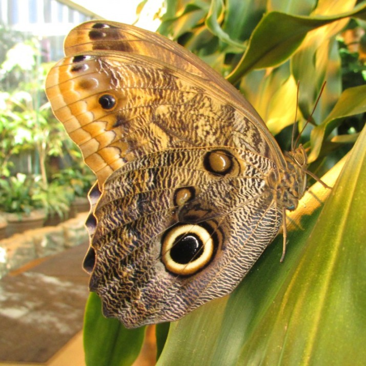 Butterfly at Museum