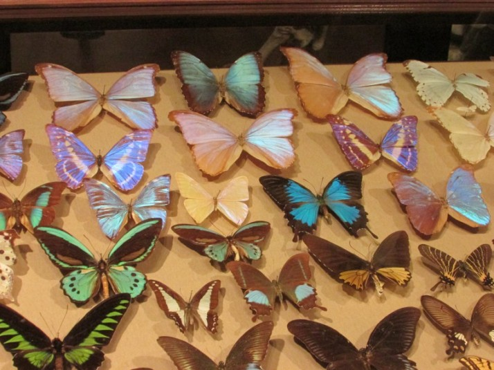 Butterflies at museum