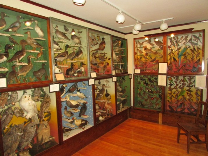 Taxidermy room at Hoard