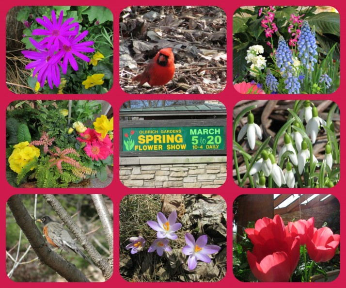 Olbrich Spring Flower Show Collage