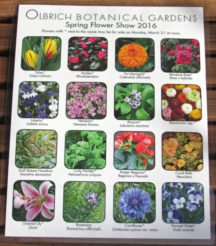 Spring Flower Show 1