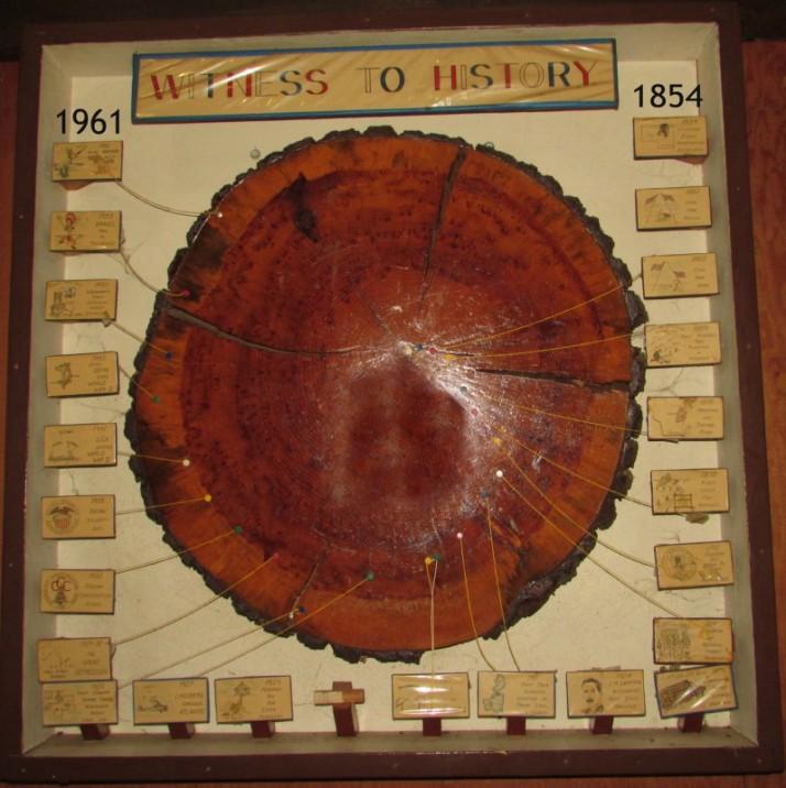 Old Tree 1854-1961