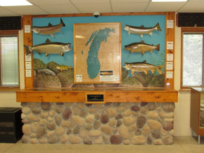 Fish display at Lincoln Park Zoo